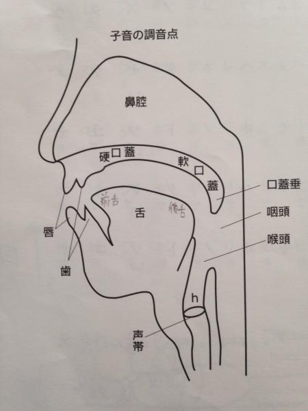 フリーアナウンサー シンガー ひろきゆみこ 講演会 調音点